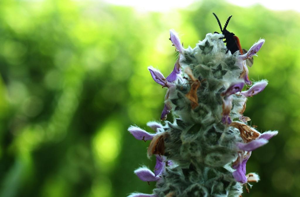 bugcrop