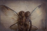 Their wings are slightly larger than most faeries I have seen.