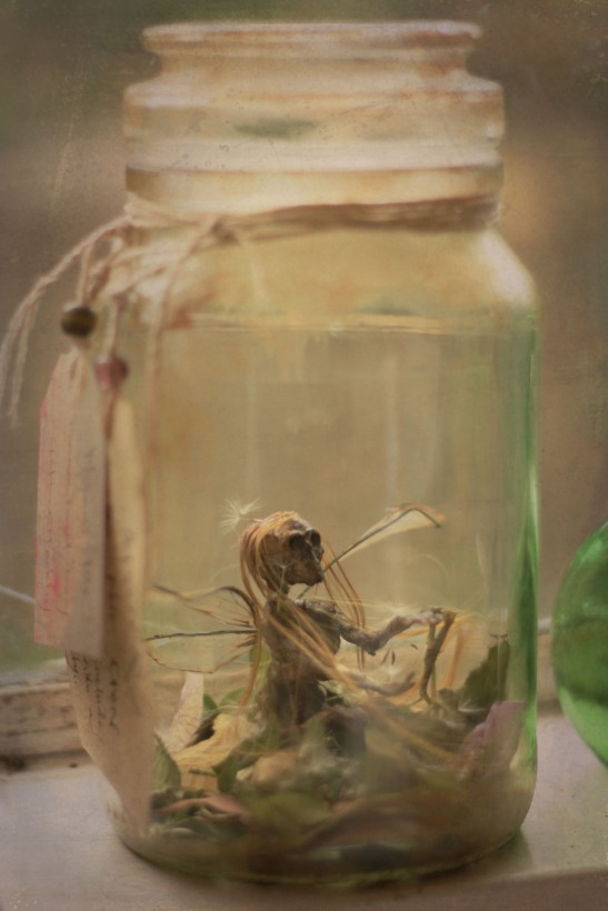 Dead Faery in a Jar